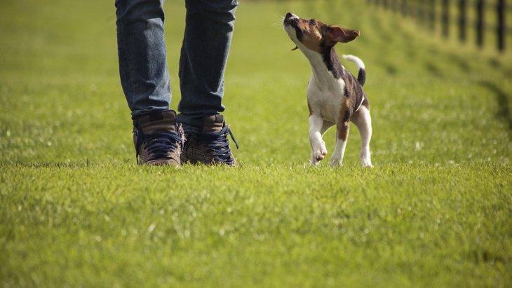 『太りやすい犬』の特徴3つ!気を付けるべきポイントは?