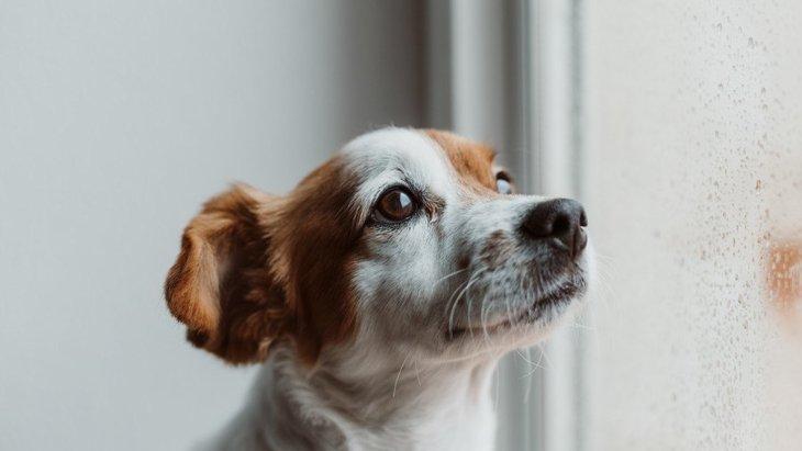 犬が飼い主にガッカリしている時の仕草7選