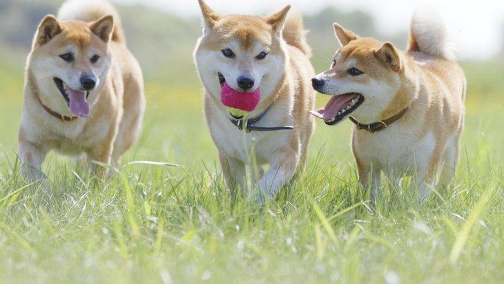 ご近所トラブルを防ごう!犬を飼い始めた時の近隣への必要な配慮3つ