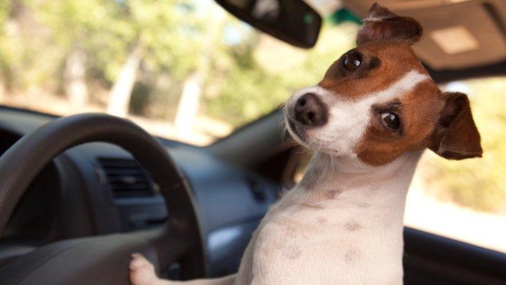状況や場面によって使用したい【ペットタクシー】について知っておきたいこと