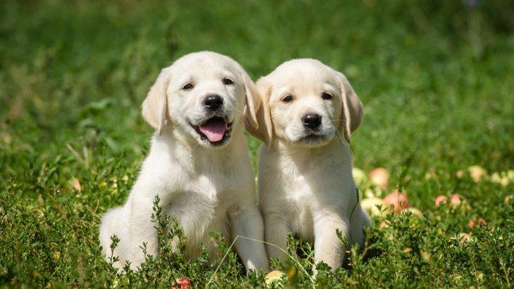 犬のネット購入、あなたはどう考えますか?メリットとデメリット
