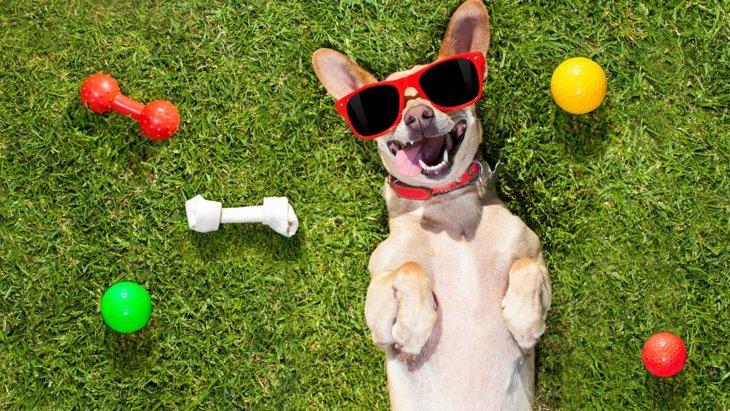 犬が『すぐに飽きてしまうオモチャ』5選!共通点や好まれるオモチャの特徴を解説