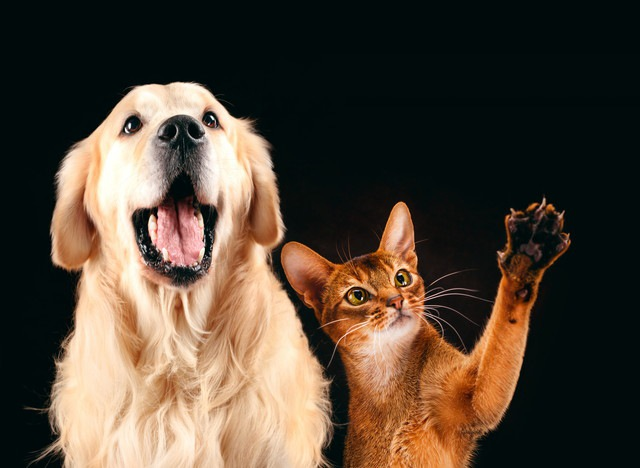 犬の飼い主と猫の飼い主へのアンケート調査。見えてきた違いと共通点は?