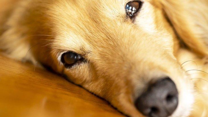 犬が飼い主に触ってほしい時にする行動3つ