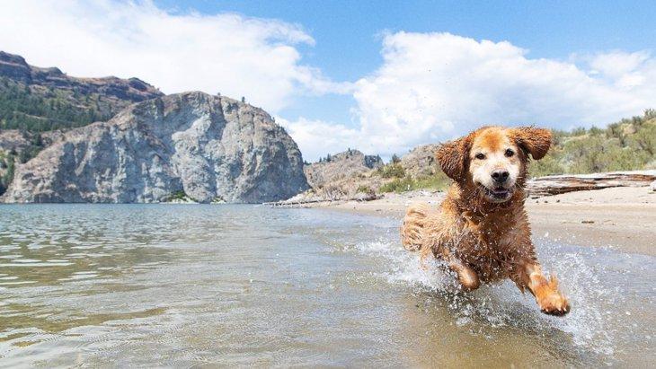 室内犬の寿命が縮んでしまう『絶対NG行為』3選
