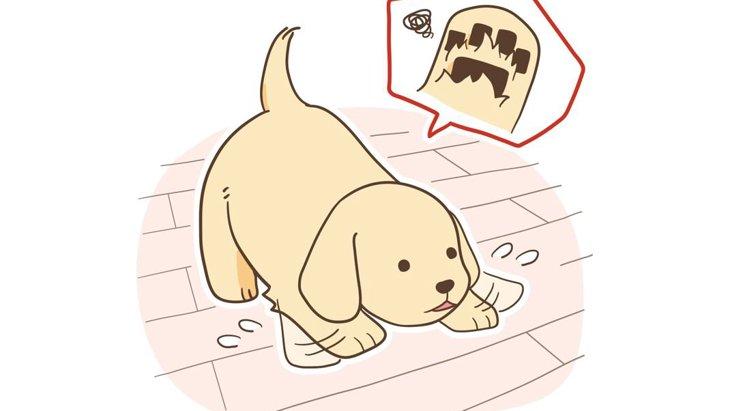 犬の「床」滑り止めアイデア!おすすめ対策グッズも