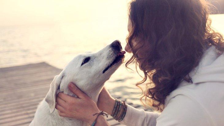 犬は『人の顔』を覚えることができるの?