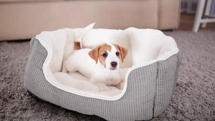 犬に買うべきではない『NGベッド』4選!合っていないベッドだと快適に眠れないかも…?