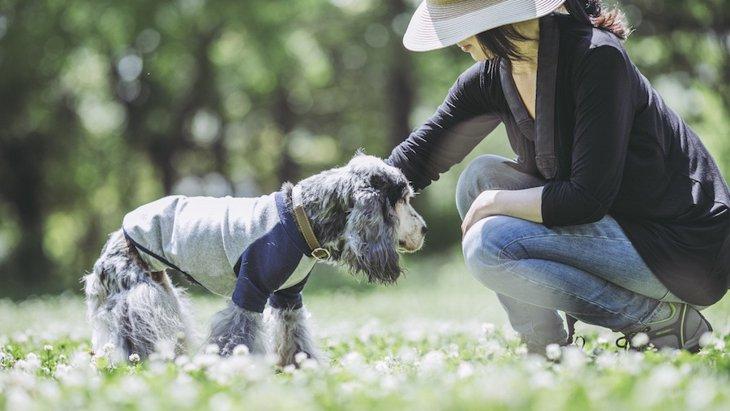 犬の視力は犬種によって違う?
