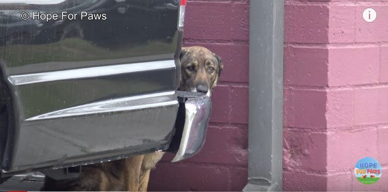 保護が不安で「ヒーン」と鼻を鳴らす犬。幸せになった姿に涙