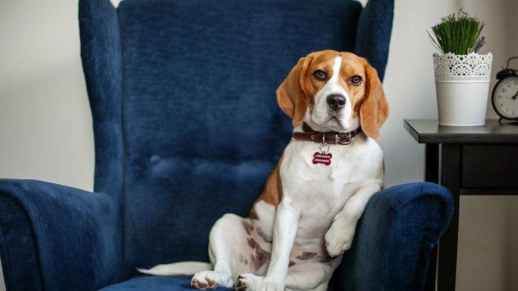 『自分が一番偉い!』と思っている犬がする9つの困った行動