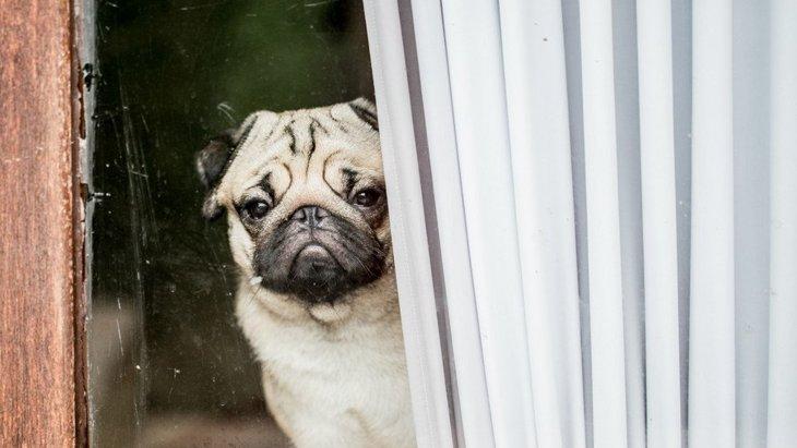 犬が窓の外をぼーっと眺めている時の気持ち4つ