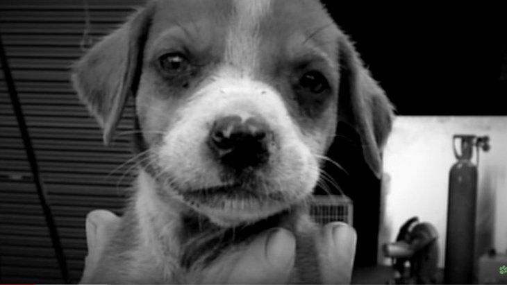 「11匹の子犬をレンガで殴った」虐待犯に絶句…魔手から唯一救われた犬