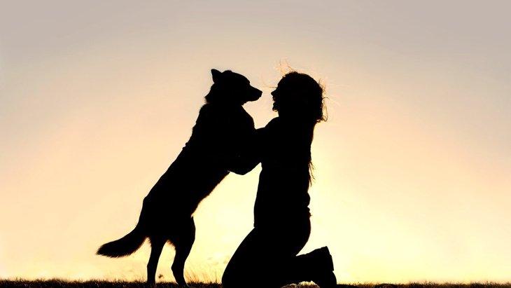 あなたの子はどう?犬が『飼い主と再会した時に見せる反応』7選