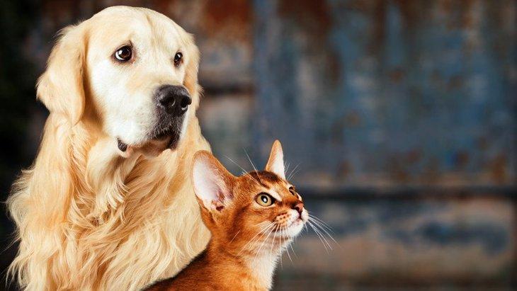 意外な関連?キリスト教徒は犬を好み、無神論者は猫を愛するという調査結果