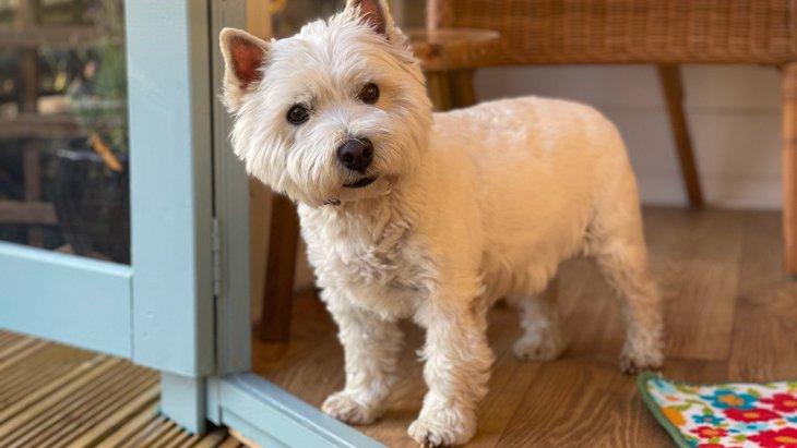 犬は『足音』だけで飼い主が分かるって本当?どうやって聞き分けているの?