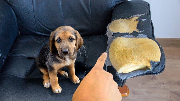 犬が叱られている最中に『上目遣い』してくる心理4つ