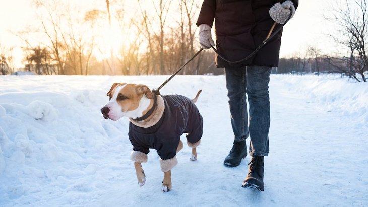 冬の犬の散歩で『靴』は履かせた方がいいの?