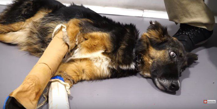 虐待を受けて骨折した盲目の犬をレスキュー。回復を喜ぶ姿に涙