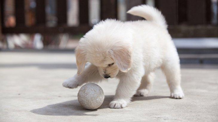 犬が遊んでいるときに考えていること