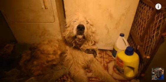 大型犬の子犬工場で、汚物にまみれた犬は必死に這って出ようとしていた