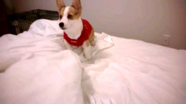 飼い主さんの気持ち伝わらず。セーターを嫌がるワンちゃん