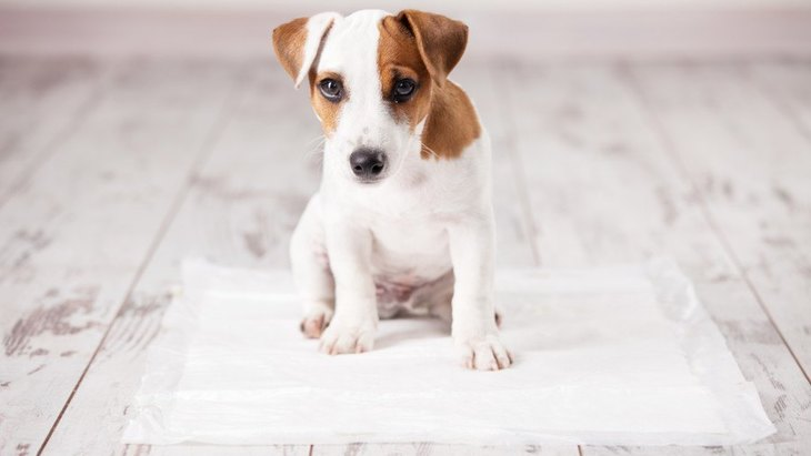 犬のオシッコの色が変な時に考えられる病気8つ