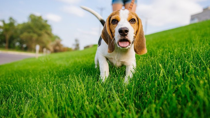 犬が慌てている時に見せる仕草や行動5つ