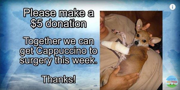 虐待する飼い主から犬を助けた女性、その女性を助けた保護団体の連携!