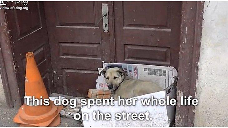 誰も手を差し伸べなかった…長年路上生活を強いられていた犬