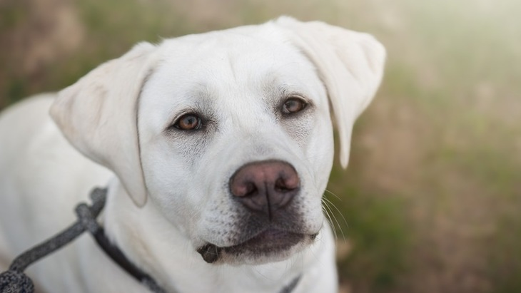 愛犬からのお願い。飼い主にやめてほしい5つのこと。