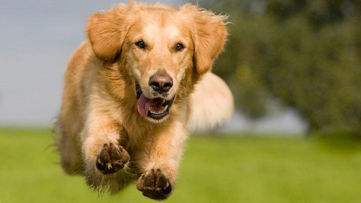 運動量が多い犬種6選!飼う時の注意点まで