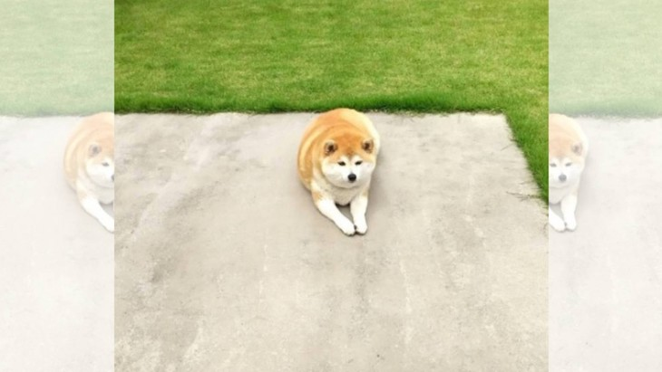 「なんで?」愛犬のために広いドッグランを作った結果が話題♪