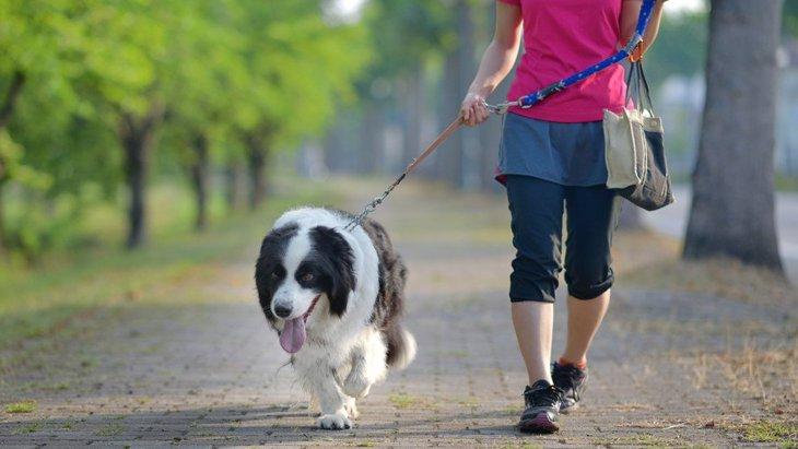 犬を飼っていると健康的になる理由5つ