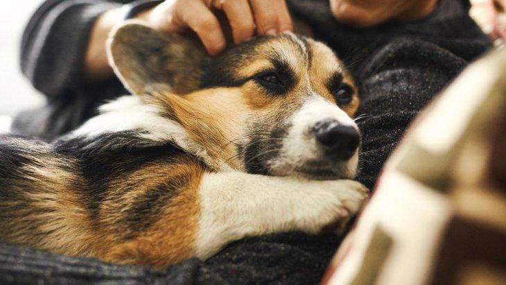 犬が飼い主に『添い寝』してくる心理4選!寄り添ってくるのは信頼の証でもある?♡