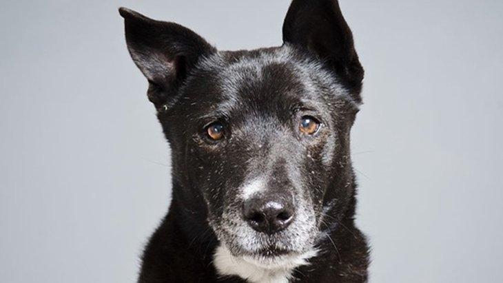 ある女性写真家が保護されている老犬を撮り続ける深い理由(まとめ)