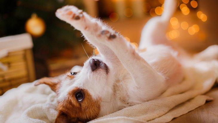 犬とのクリスマスの楽しい過ごし方6選