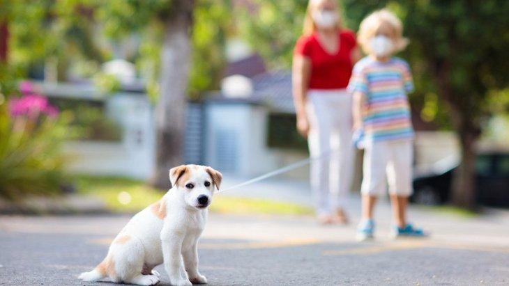 【新型コロナ】愛犬との散歩時、他の人との距離の取り方はどうするべき?