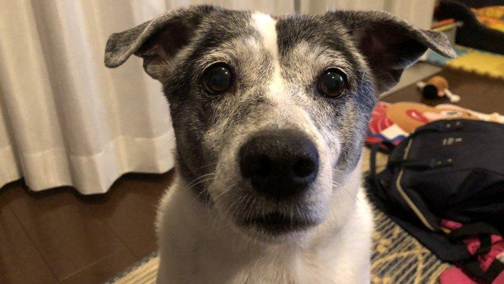 家に豊かさを運んでくれている元保護犬|Laylaのペットリーディング