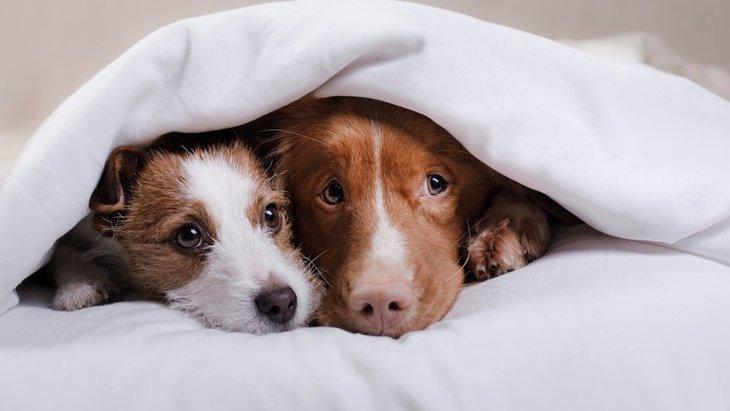 愛犬が夢に出てくるのは意味がある?どんな心理状態なの?
