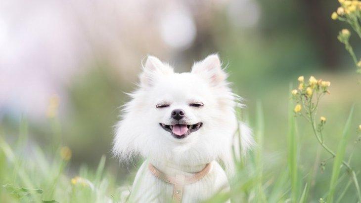 愛犬が夢に出てくる理由はコレだった!5つの心理状態を徹底解説