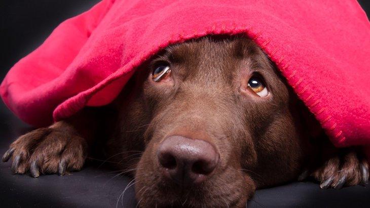犬が地震や雷で怯えているとき、飼い主にできる2つのこと