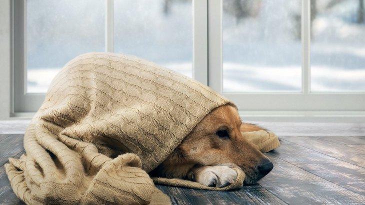 覚えておくと便利!犬の冬のお手入れをするコツ2選