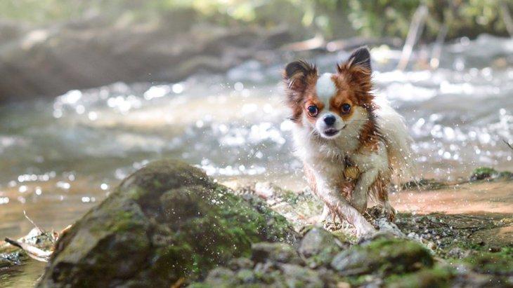 千葉県の『粟又の滝』で愛犬とのんびりお散歩