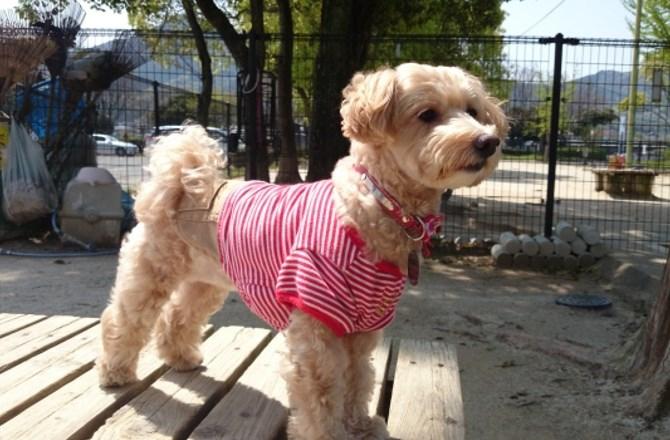 愛犬の衣類やタオルなどは、どのように洗濯してますか?