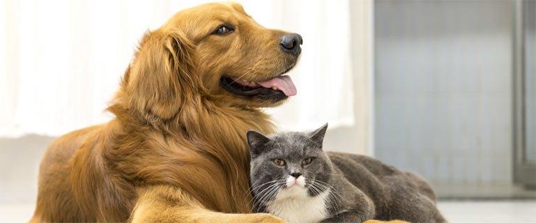 【ペット保険はどこで比べる?】ペット保険の比較ポイント3選