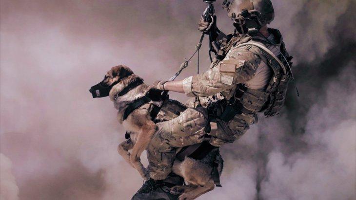 犬が原因で火事になる?!留守番中に起こる可能性がある超危険なトラブル3選