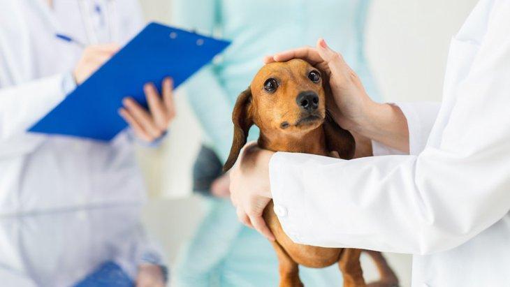犬の会陰ヘルニア~症状や原因、治療から予防法まで~