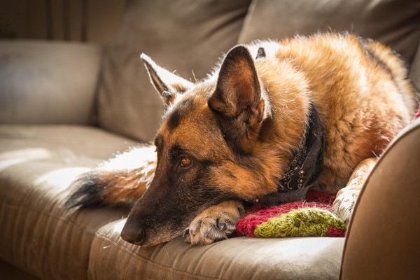 犬が腹痛の時に見せる仕草や症状と原因