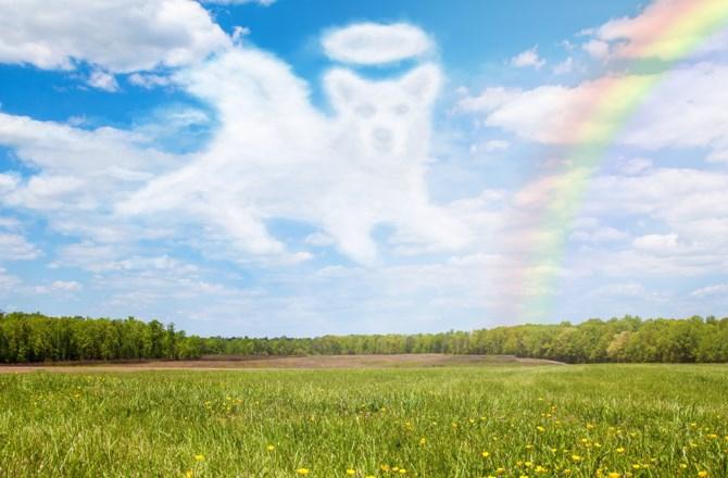 天国にいる愛犬への手紙